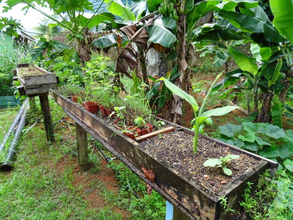 Treasure Farm Herbs